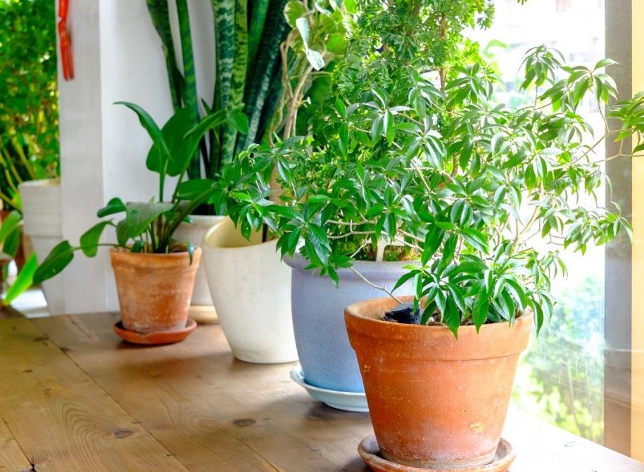 Новые растения