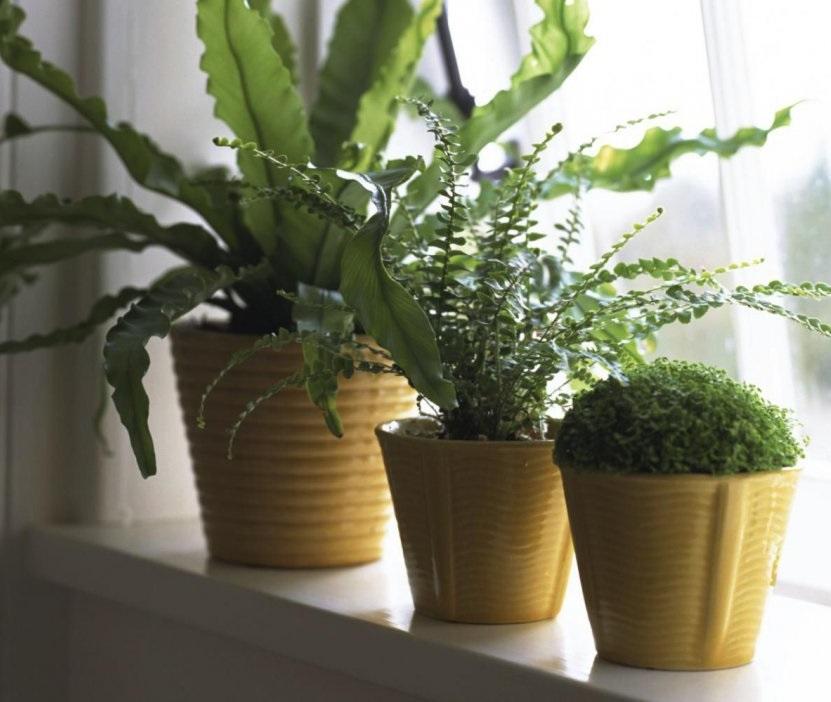 Что делать с новым комнатным растением